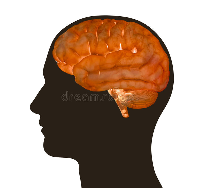 Download Illustration Of Human Brain And Male Profile Stock Illustration - Illustration: 15202648