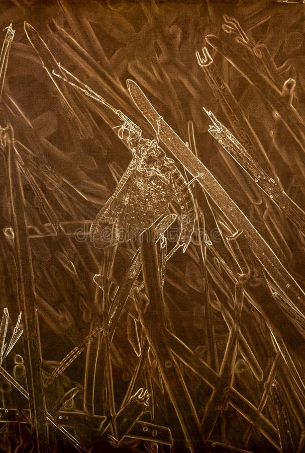 Illustration i Sepia av en makro av en jätte- dagsländaHexagenia limbata arkivfoton