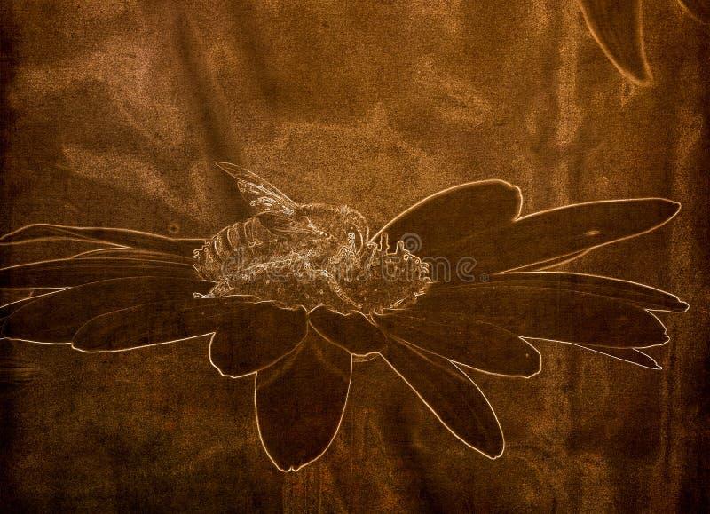 Illustration i Sepia av en makro av en mellifera för arbetarhonungsbiApis som vilar på en blomma fotografering för bildbyråer