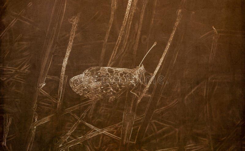 Illustration i Sepia av en pärlaCrescent Butterfly Phyciodes tharos som sätta sig på tistel arkivbild