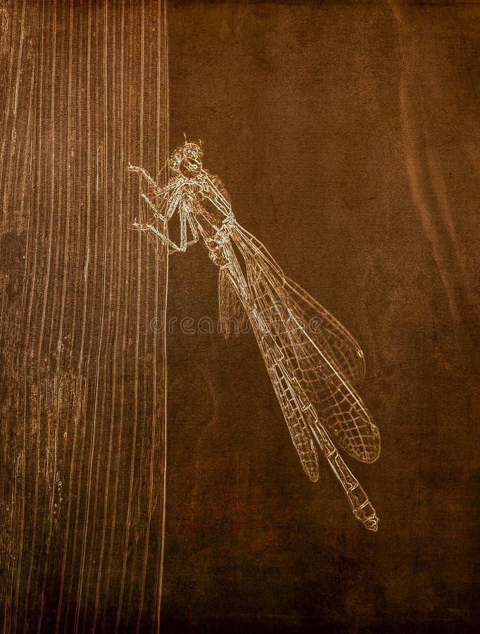 Illustration i Sepia av ett makroskott av en Tule Bluet Damselfly på stjälk av gräs royaltyfri bild