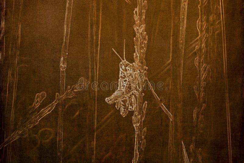 Illustration im Sepia eines Makro eines rotfüßigen Heuschrecke Melanoplus femurrubrum, das auf einen Grashalm hängt lizenzfreies stockfoto
