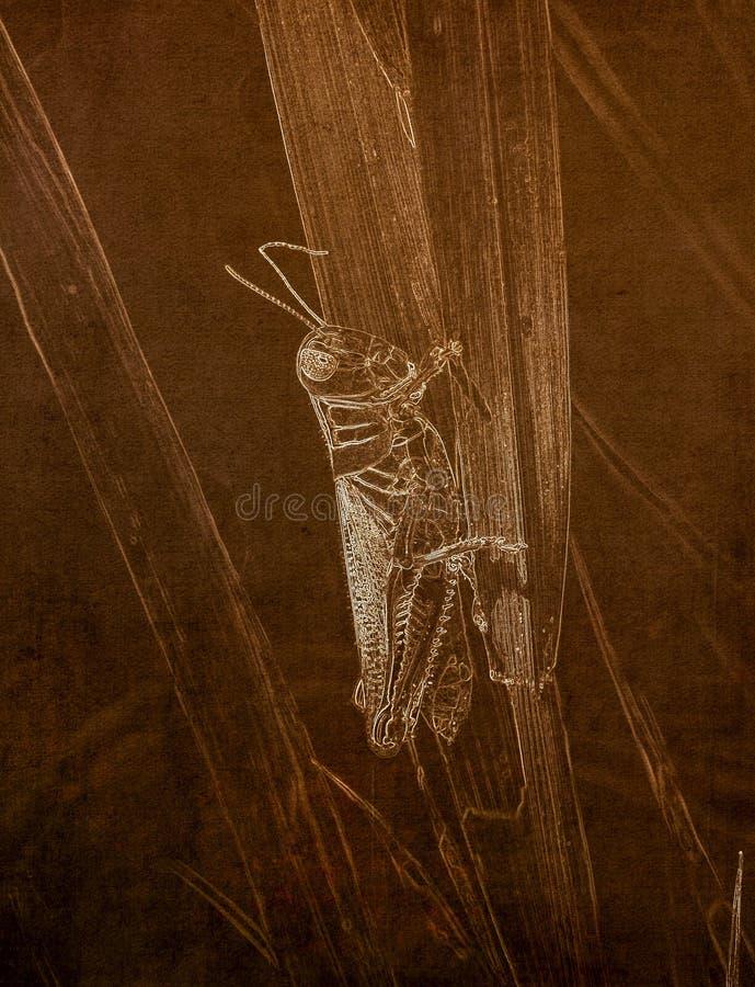 Illustration im Sepia eines Makroschusses Zwei-gestreiften Heuschrecke Melanoplus bivittatus auf Gras lizenzfreie stockfotos