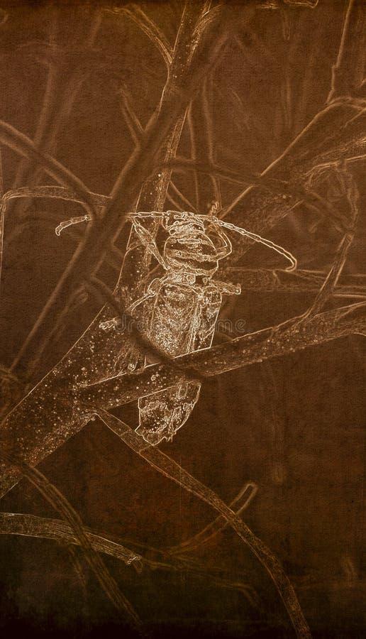 Illustration im Sepia von ein destruktiven Heuschrecken-Bohrer Megacyllene-robiniae, die einen Baum klettern stockfotos