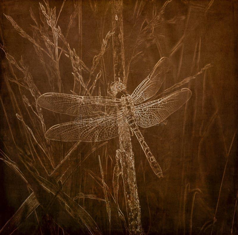 Illustration im Sepia von ein Ost-Pondhawk-Libelle Erythemis-simplicicollis gehockt auf Gras lizenzfreie stockfotos