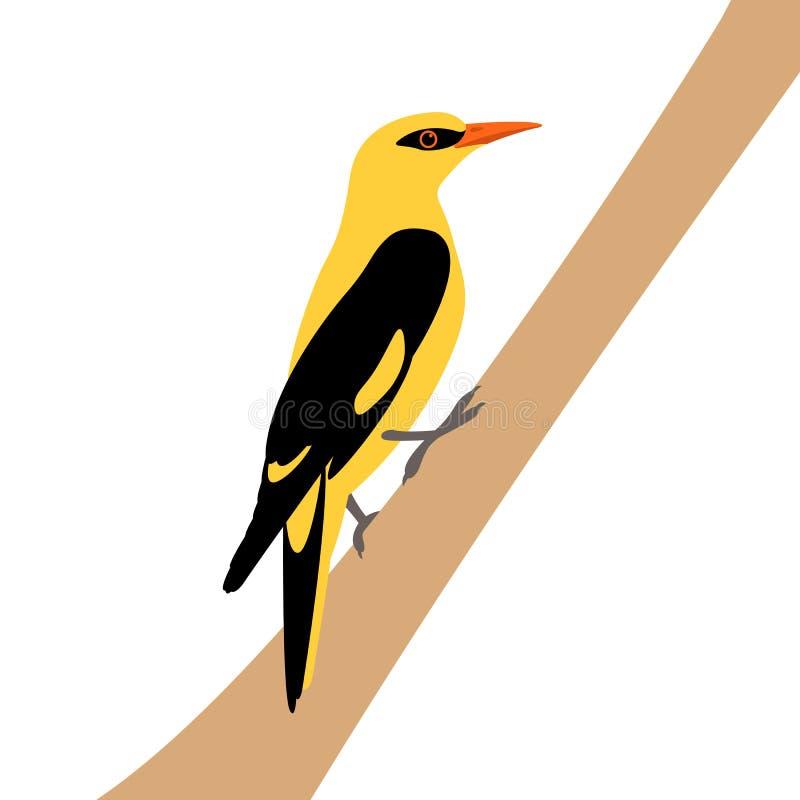 Illustration indienne s de vecteur de loriot d'or illustration libre de droits