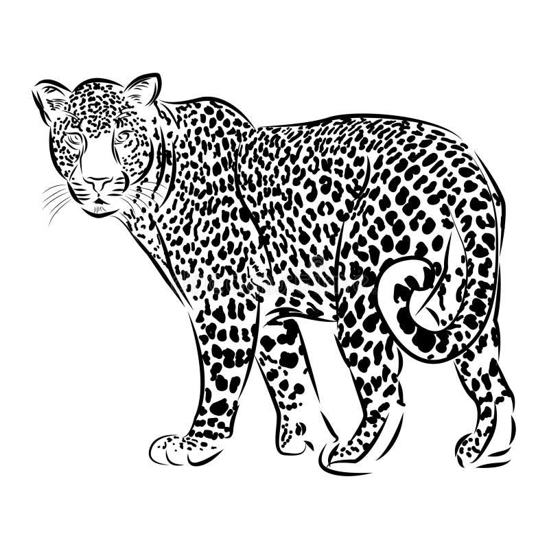 Illustration léopard de croquis de vecteur de schéma illustration stock
