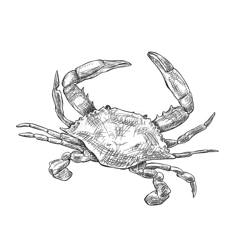 Illustration With A Large Crab Drawn By Hand On A Light Background ...