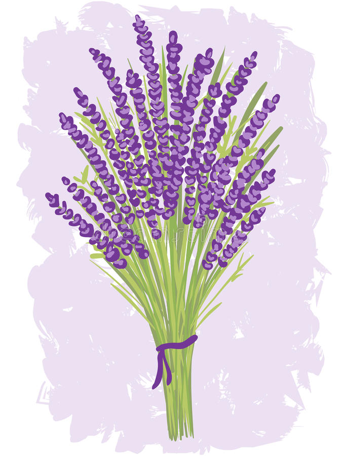 Download Illustration Of Lavender Bouquet Stock Vector - Image: 26174363