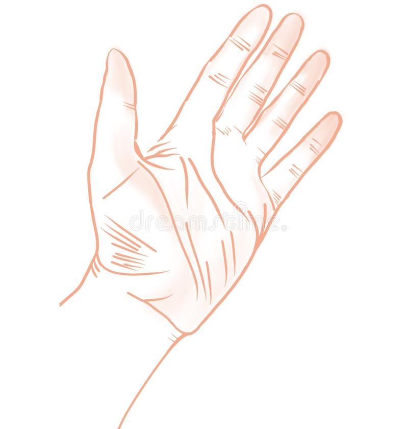 Illustration of the left hand, contour, isolated, white background. Raster illustration of the left hand, contour, isolated, white background royalty free illustration
