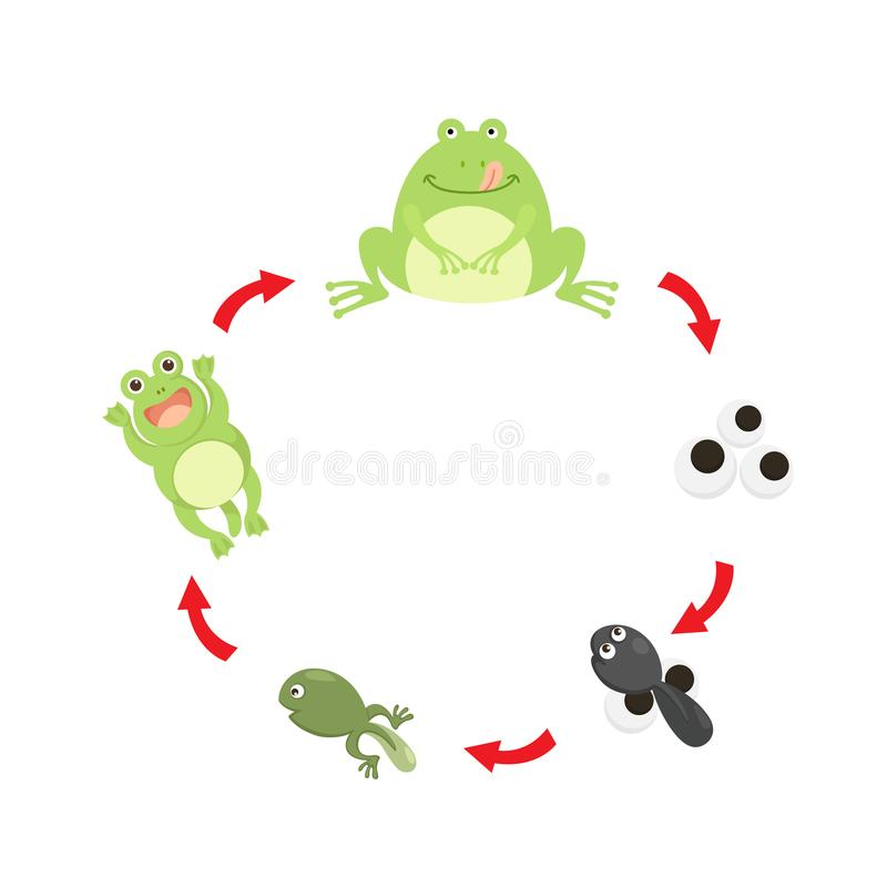 Illustration life cycle frog. Vector vector illustration