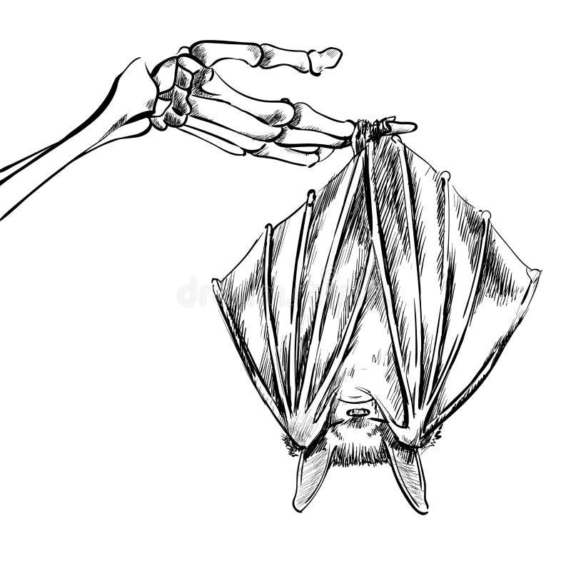 Illustration linéaire d'une batte photos stock
