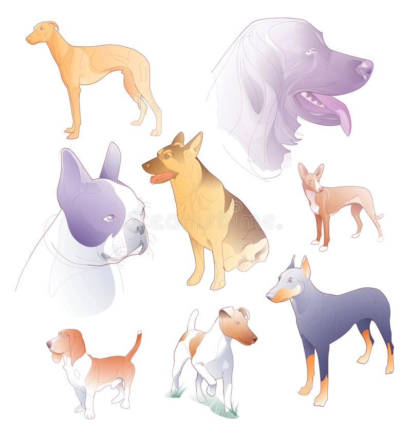 Illustration of line and spot colors of various breeds of dogs vector illustration