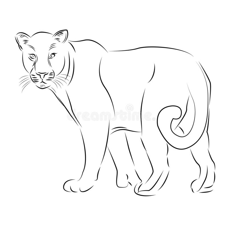 Illustration lions de croquis de vecteur de schéma illustration libre de droits