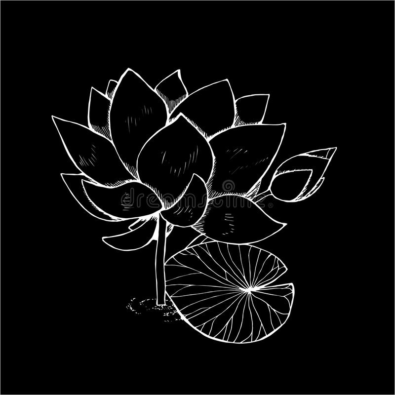 Illustration of lotus flower in style. Black and white lotus pattern. Chalk on a blackboard. vector illustration