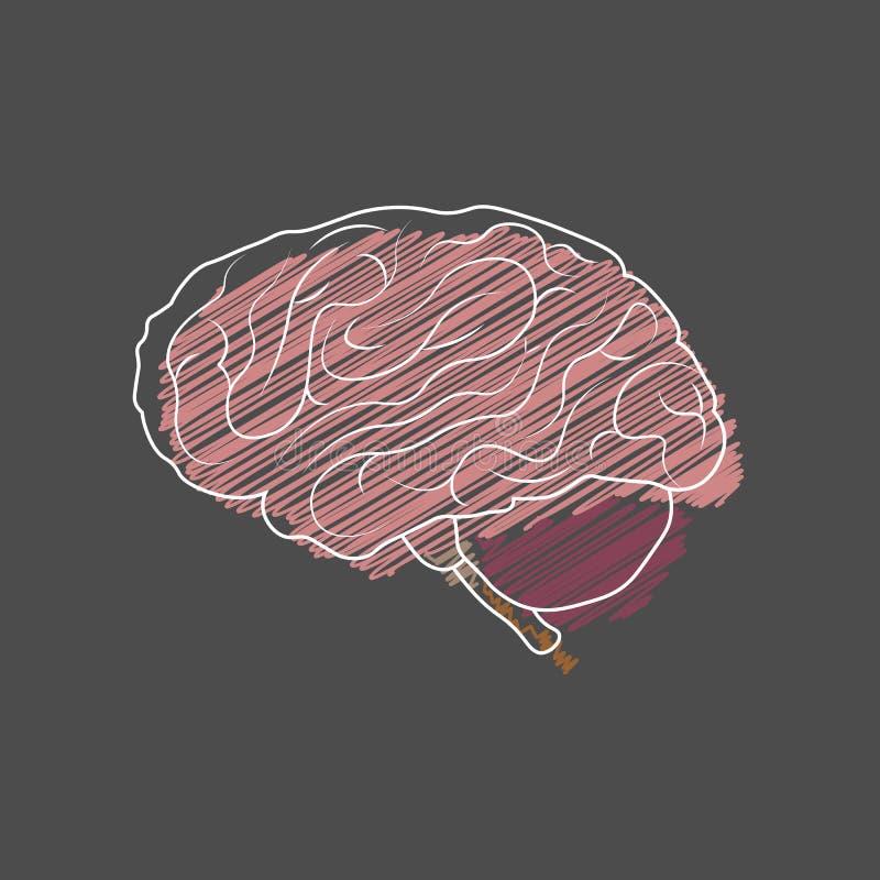 Illustration médicale de vecteur Cerveau ou côté d'esprit Dénommer la hachure illustration libre de droits