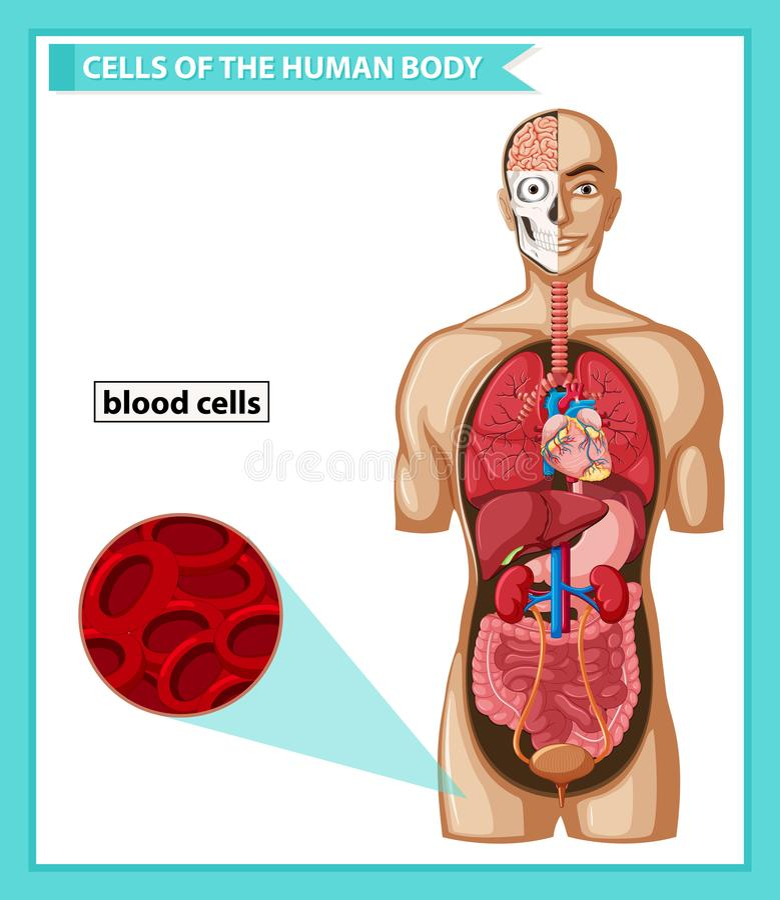 Illustration médicale scientifique des globules sanguins illustration de vecteur