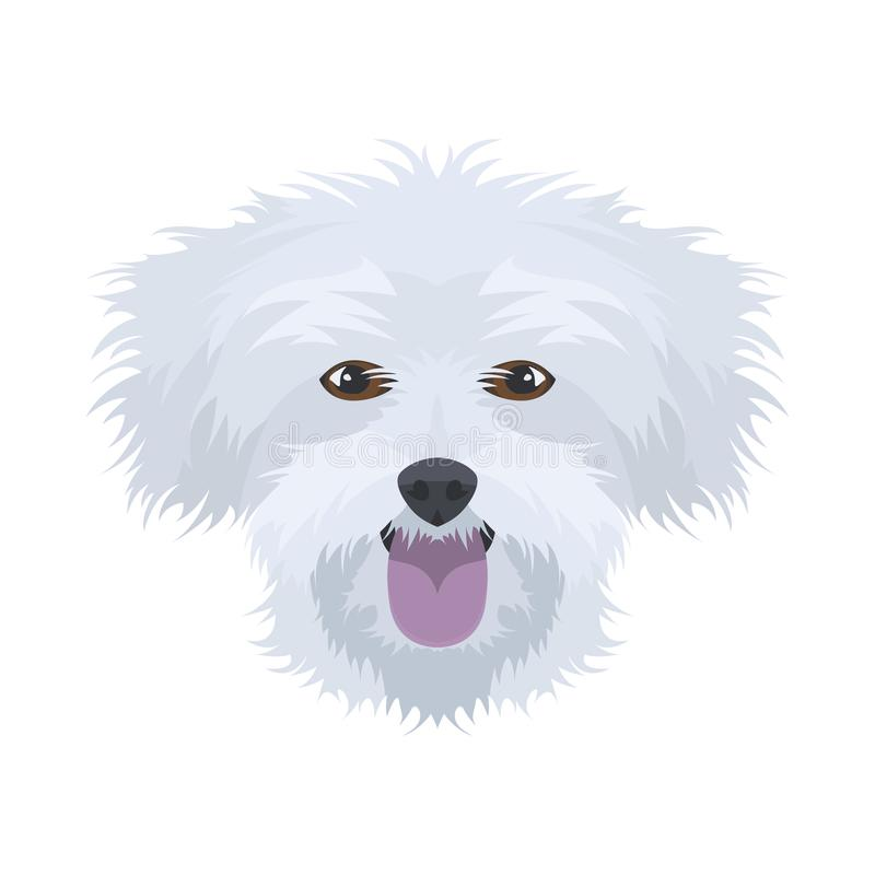 Illustration dog`s head Maltese vector illustration