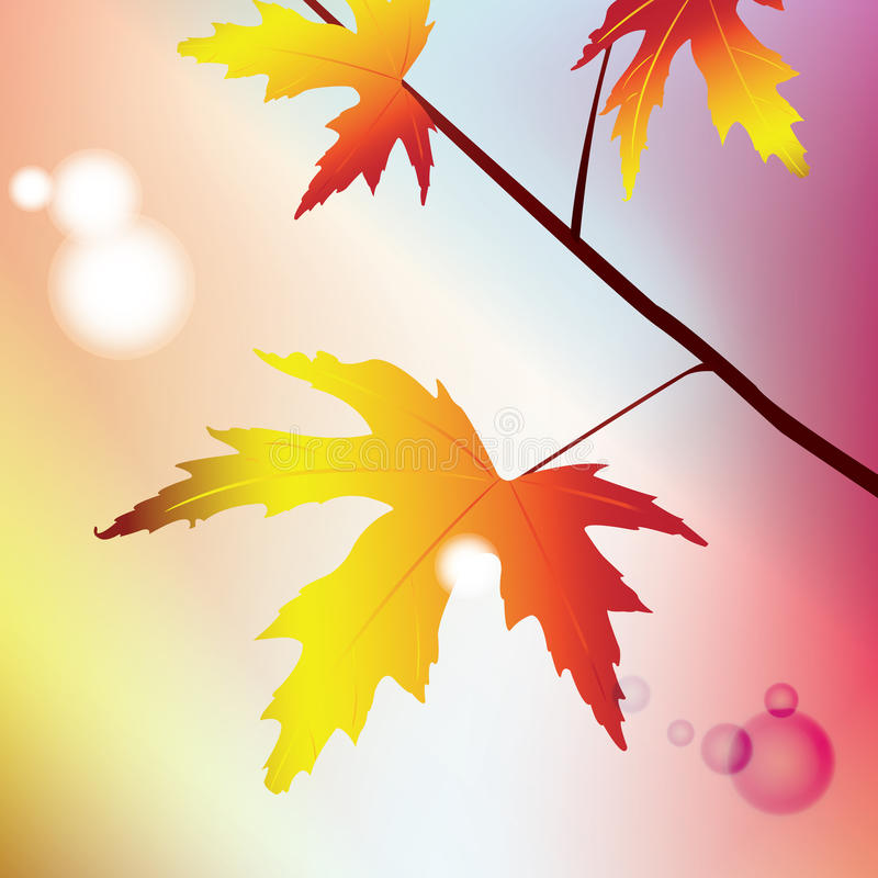 Illustration of maple branch stock images