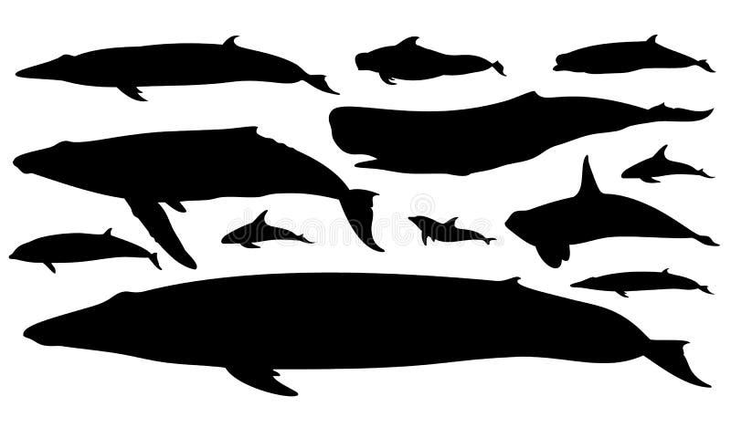 Illustration of marine mammals vector illustration