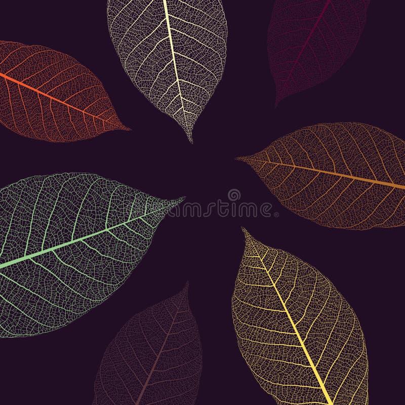Illustration mit den Skeletten von Blättern lizenzfreies stockfoto