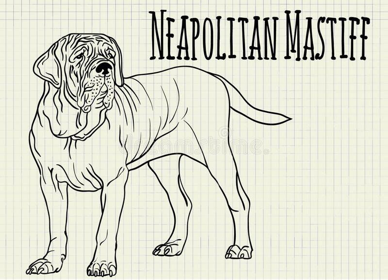 Illustration neapolitan mastiff on notebook sheet royalty free illustration