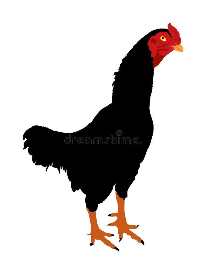 Illustration noire de vecteur de coq d'isolement sur le fond blanc Poulet tha?landais Coq de fondation de messes de ferme Oiseau  illustration de vecteur