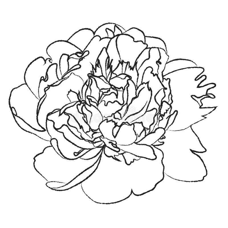 Illustration noire et blanche de fleur de pivoine illustration de vecteur