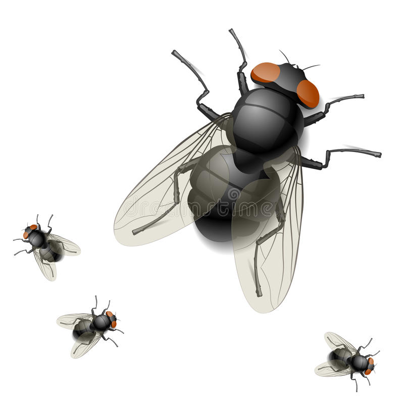Free Illustration Of A Housefly Stock Image - 13357961