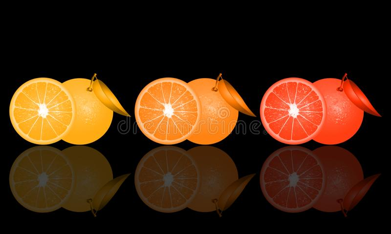 Illustration of oranges on black background and its reflection.  stock illustration