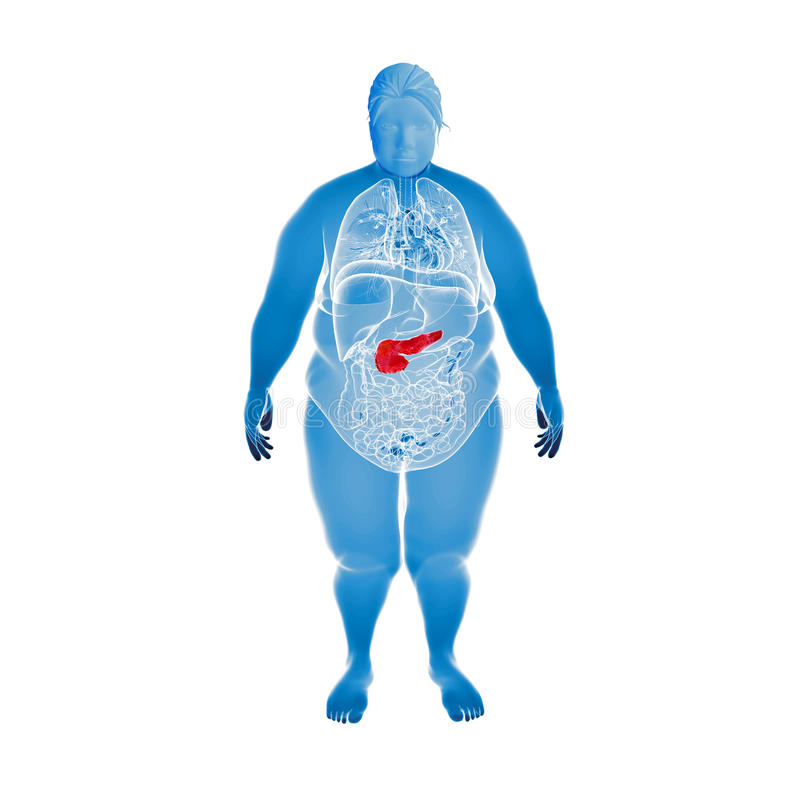 Download Illustration Of The Overweight Female Pancreas Stock Illustration - Image: 39094644