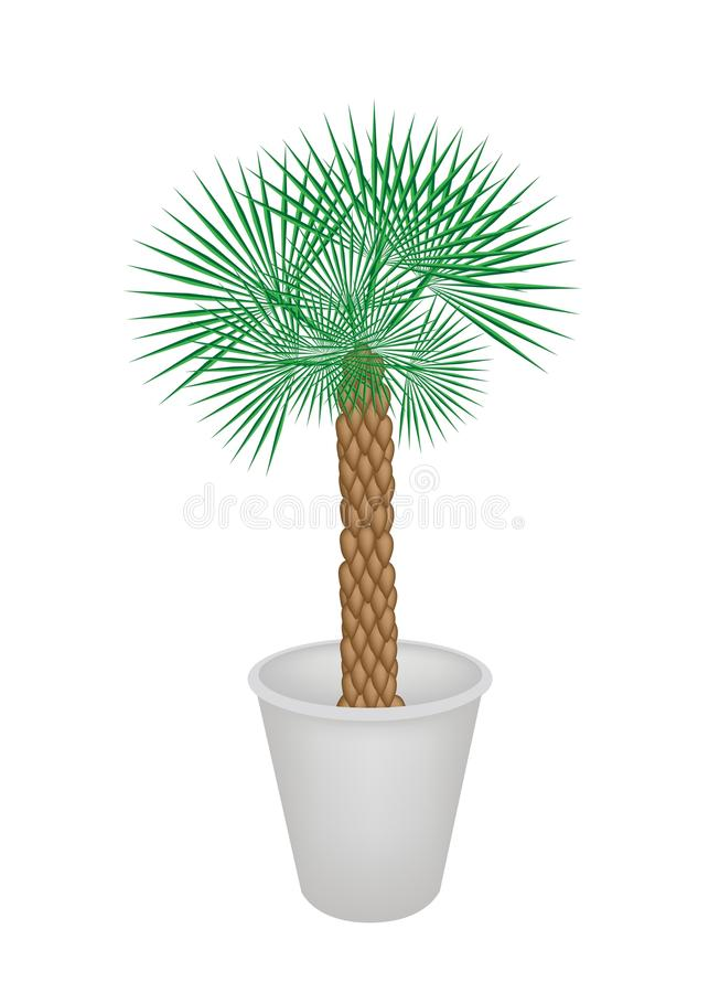 Illustration Of A Palm Tree In Flower Pot Stock Photos