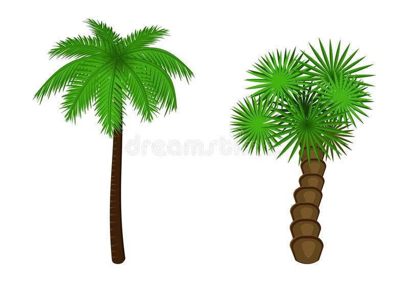 Illustration of a palm tree, two palm tree on white background royalty free stock photography