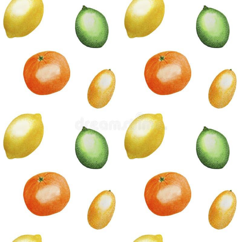 Pattern Fruits Citrus Orange Lemon Lime Watercolor illustration Tropics food Digital paper Textile set Summer botanical spring dec. Illustration Pattern Fruits royalty free illustration