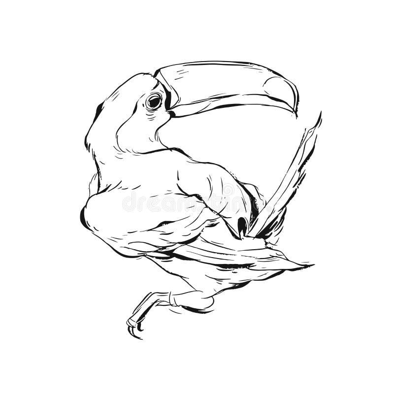 Illustration peinte brish tirée par la main de croquis d'oiseau de toucan de graphique de vecteur d'isolement sur le fond blanc T illustration libre de droits