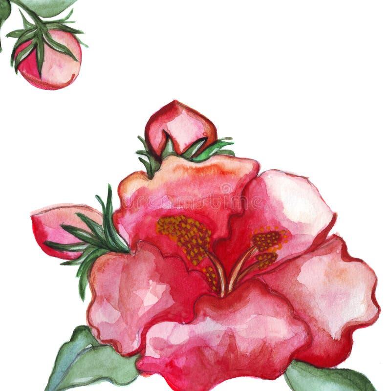 Illustration peony flower close-up details. On a white background stock illustration