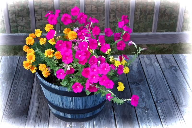 Illustration of Pink Petunias and Yellow Marigolds in a Round Wooden Planter Barrel royalty free stock image
