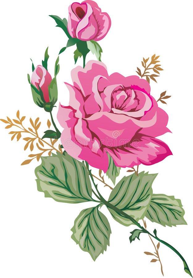 Download Illustration With Pink Roses Stock Illustration - Image: 7778510