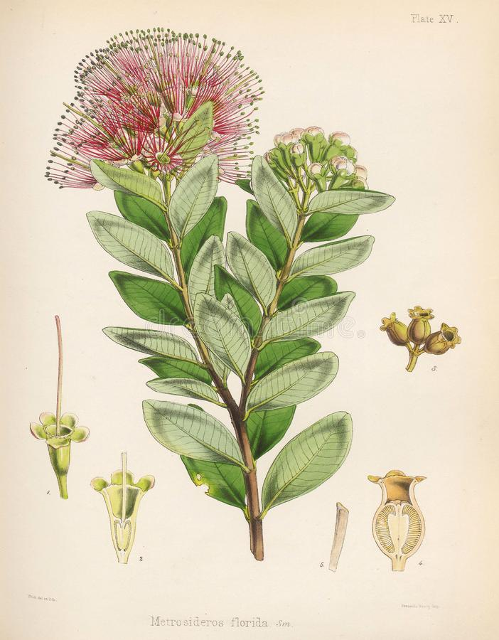 Illustration of plant. vector illustration