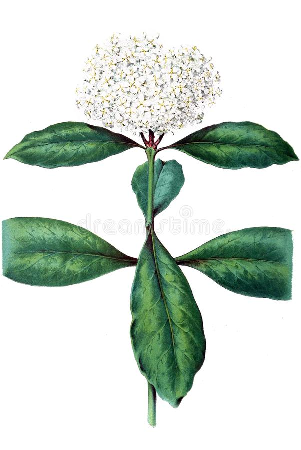 Illustration of a plant. vector illustration