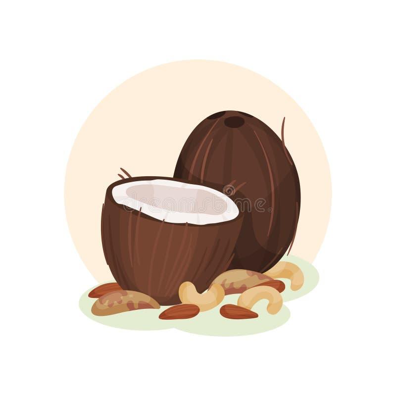 Illustration plate de vecteur de noix de coco, d'anarcadier et d'arachides entiers et cassés Produits organiques et sains Naturel illustration de vecteur