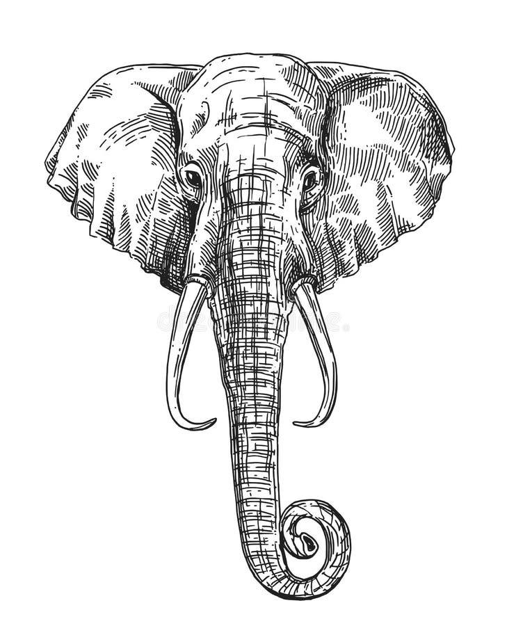 Illustration portrait of elephant. Hand drawn vector illustration portrait of elephant. Sketch style drawing vector illustration