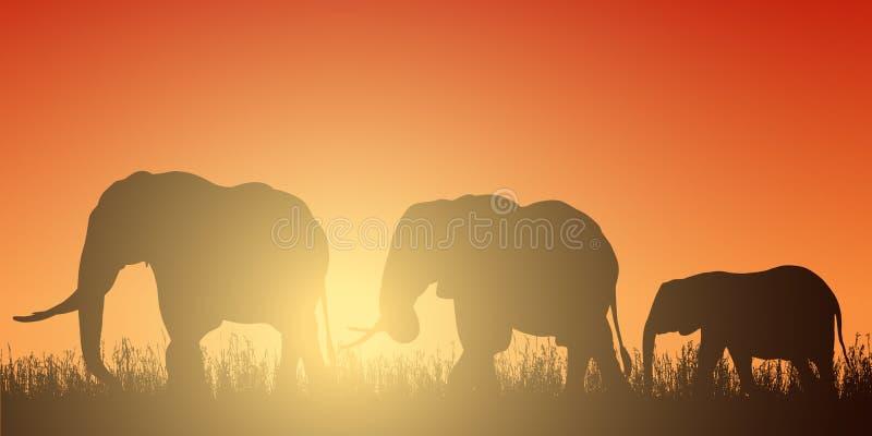 Illustration réaliste avec la silhouette de trois éléphants sur le safari en Afrique Herbe et ciel rouge-orange avec le Soleil Le illustration libre de droits