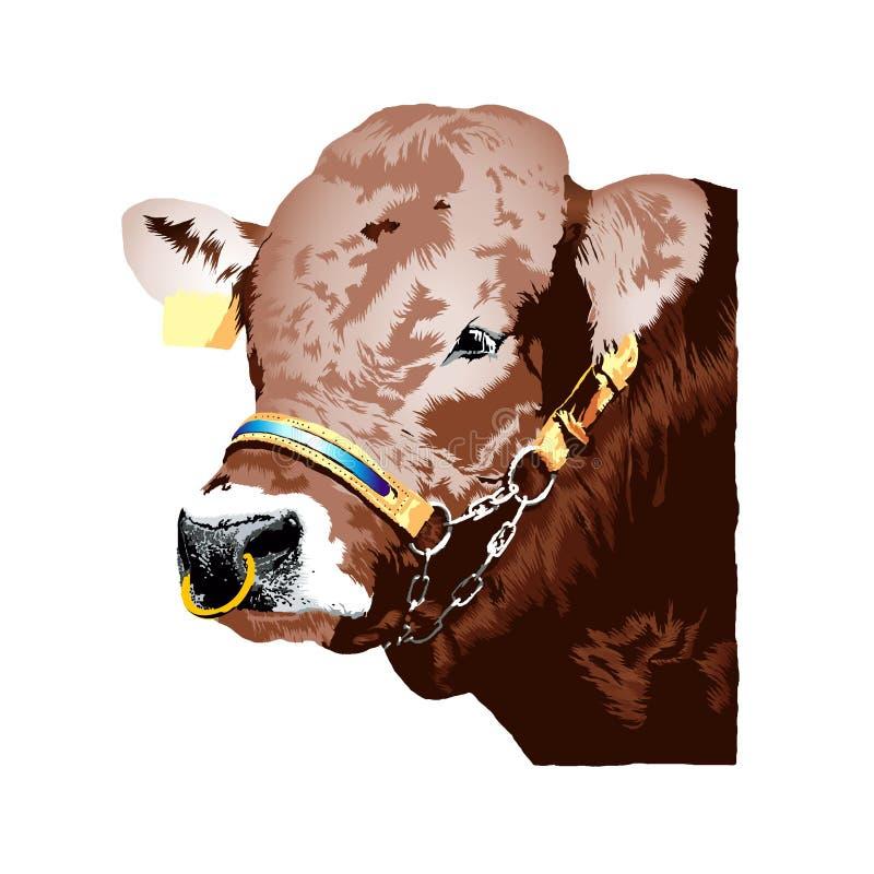 Illustration réaliste de taureau de Braunvieh d'Allemand de Brown illustration de vecteur