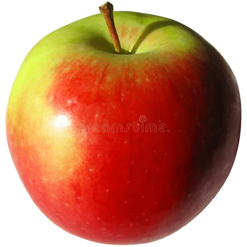 Illustration r?aliste de vecteur de pomme rouge et verte illustration libre de droits