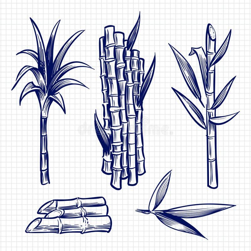 Illustration réglée tirée par la main de vecteur de canne à sucre illustration stock