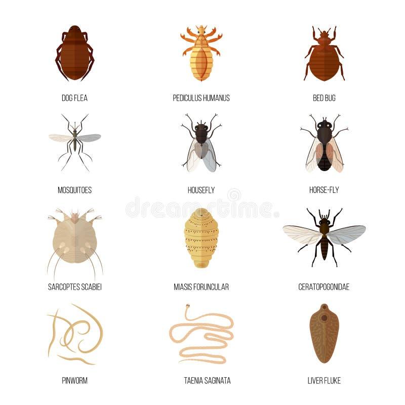 Illustration répulsive animale de vecteur d'insecte de la maladie de faune de danger de scarabée de parasite de nature de vermine illustration de vecteur
