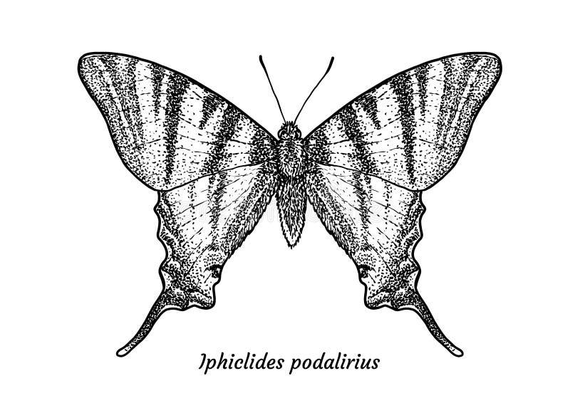 Illustration rare de papillon de machaon, dessin, gravure, encre, schéma, vecteur illustration libre de droits