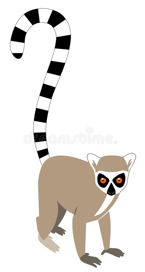 Ring-tailed lemur. Illustration of a ring tailed lemur on a white background royalty free illustration
