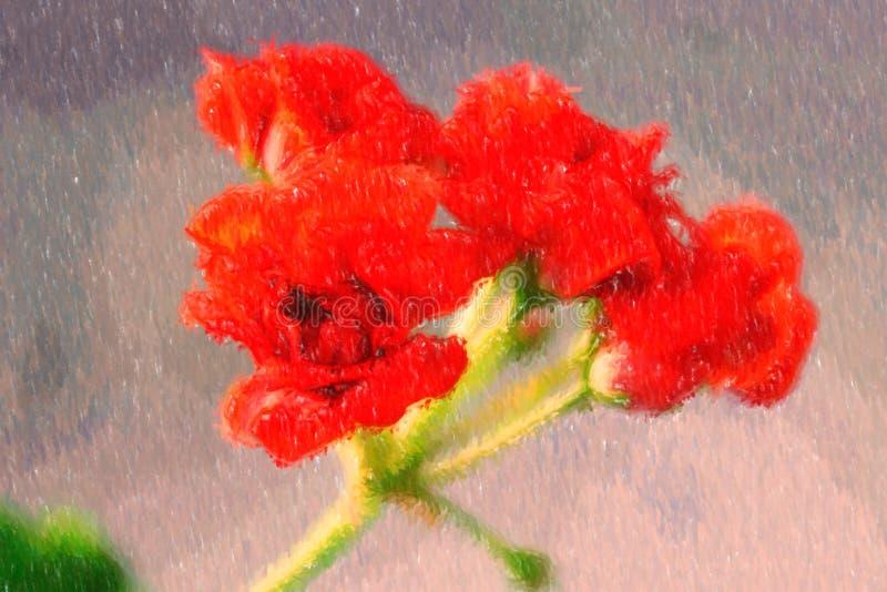 Illustration of rosebud pelargonium red heranium, known as pelargonium, flowers close-up. vector illustration